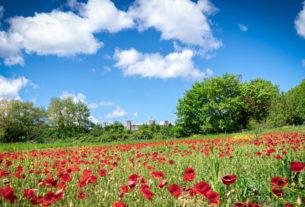 Al voto i progetti più innovativi di agricoltura sociale