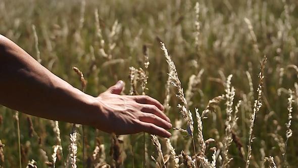Hand Through Field