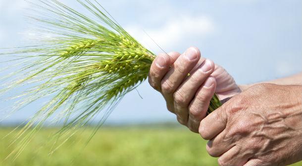 farm-hands