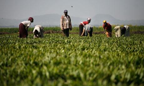 MDG--Land-grab-in-Ethiopi-007