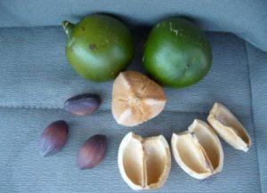 cacay-seeds-oil-e1429782902304