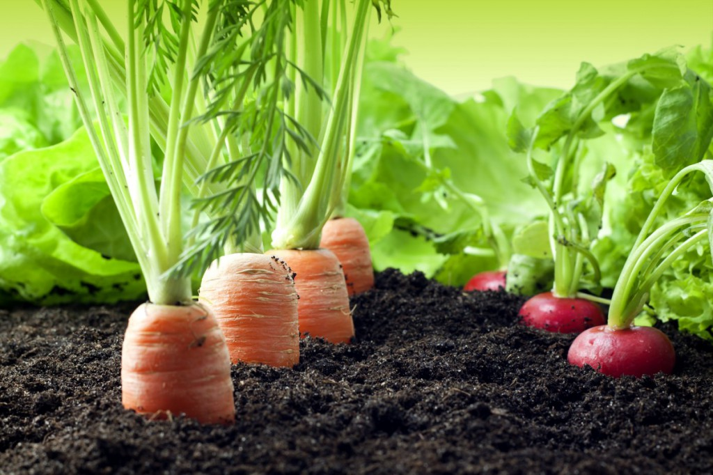 Agriculture-Photo-1