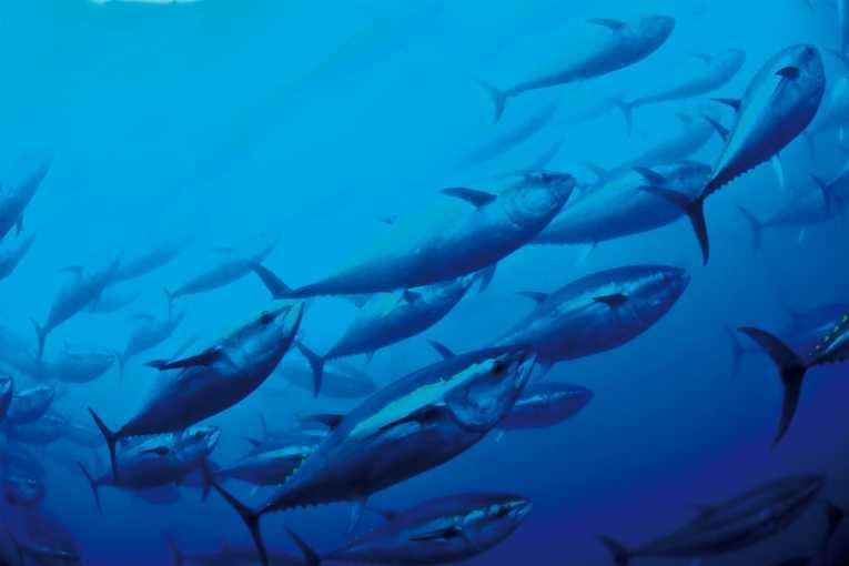 plenty-fish-mediterranean-sea-not-anymore_214