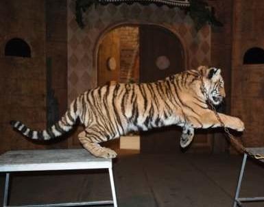 Bowmanville Zoological Park