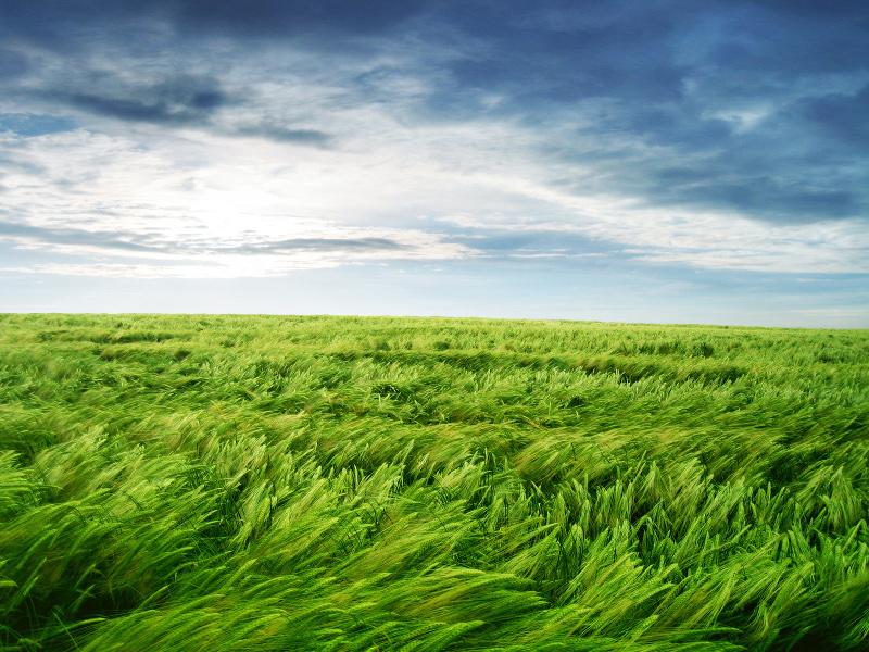 366175-green-field-photos