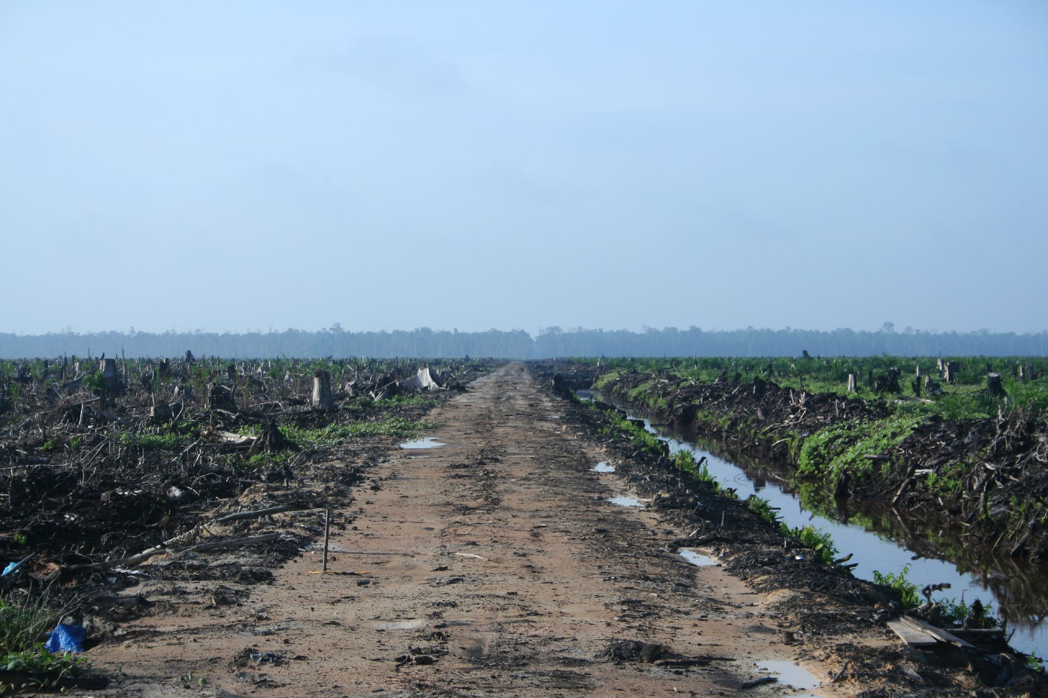 Riau_palm_oil_2007