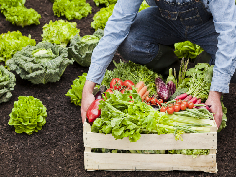Farmer with wooden box full of ripe vegetables