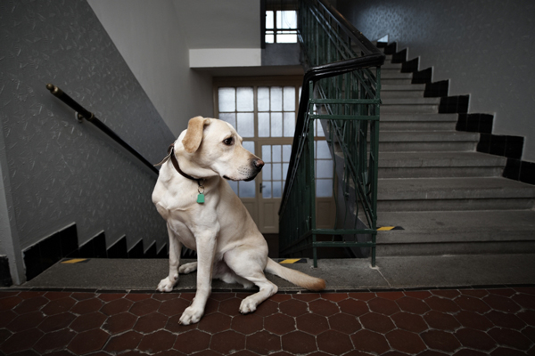 dog-apartment-living-stairs
