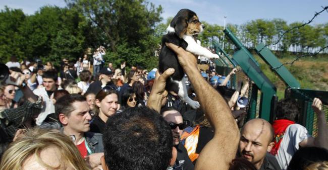 La liberazione dei beagle da Green Hill