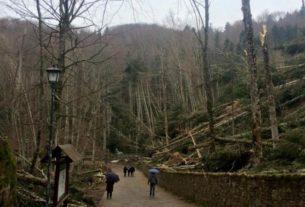 La Verna, iniziato il ripristino della foresta intorno al santuario