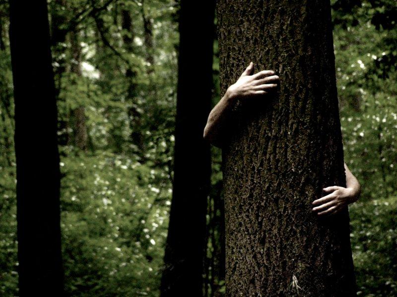 tree_hug_by_exoticman