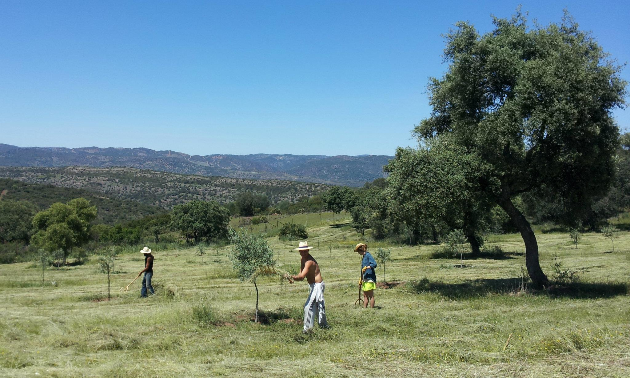 Facendo wwoofing in Andalusia