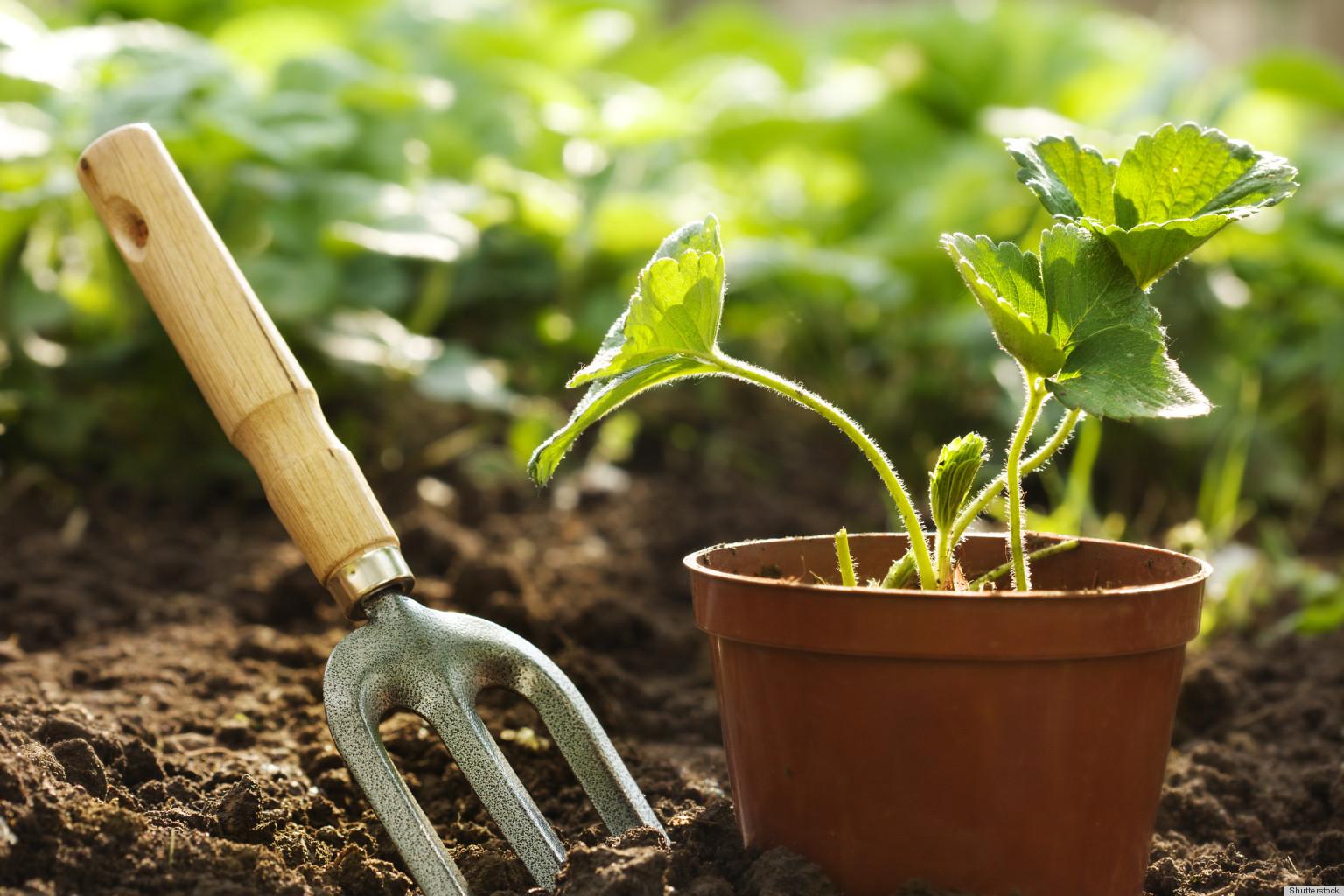 gardening (1)