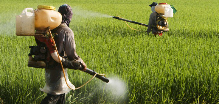 pesticides_field_guys_735_350-735x350