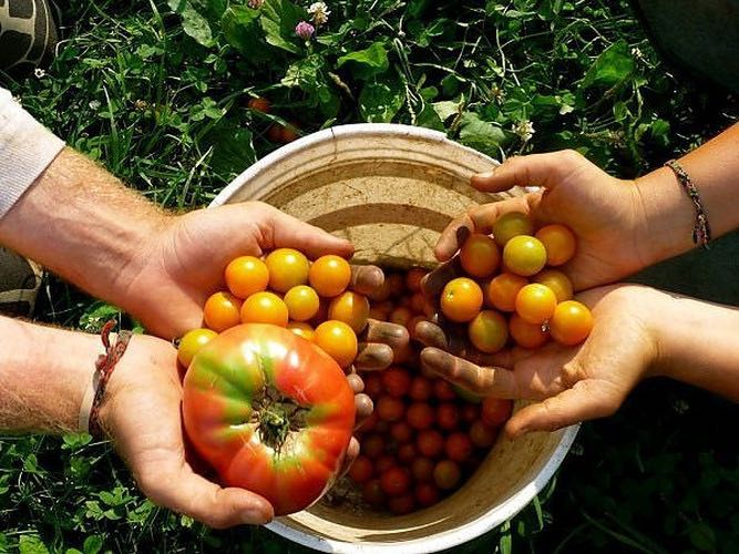 organic-food-from-italy