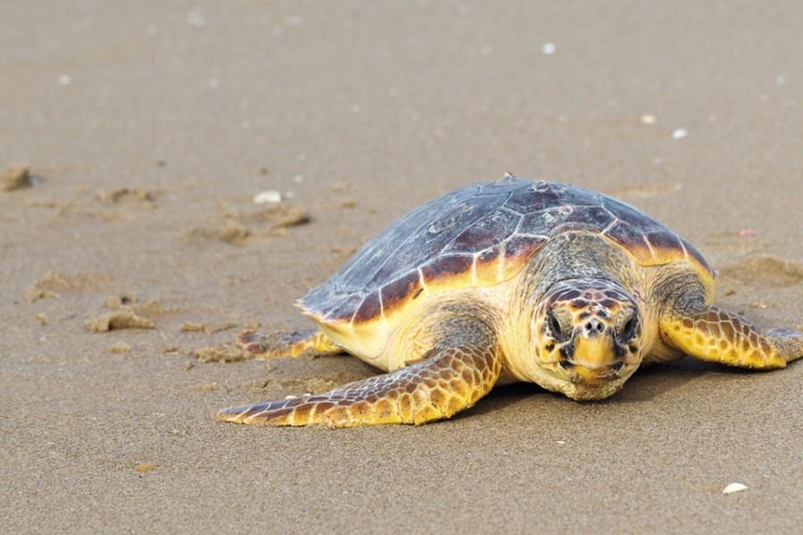 tartarughe-marine-sicilia