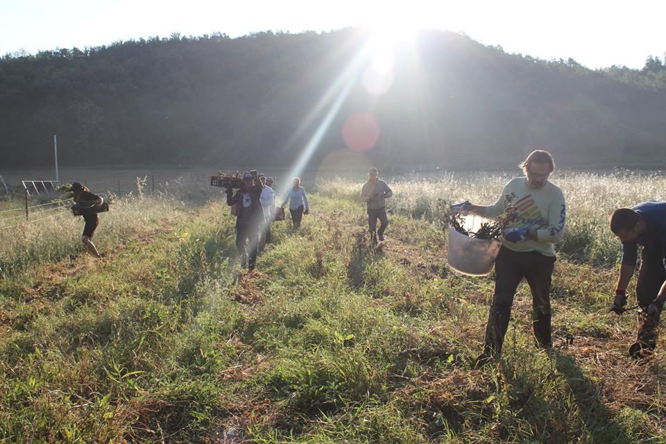 Il viaggio di Andrea, tra ecovillaggi e fattorie wwoof