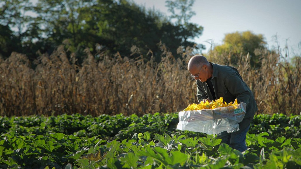 agricoltura intensiva 4