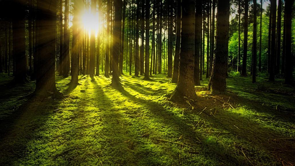 Gruppo Unitario per le Foreste Italiane