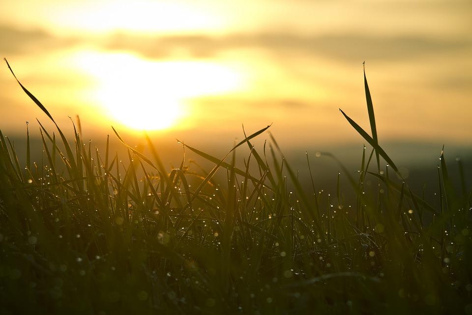grass-546794_960_720
