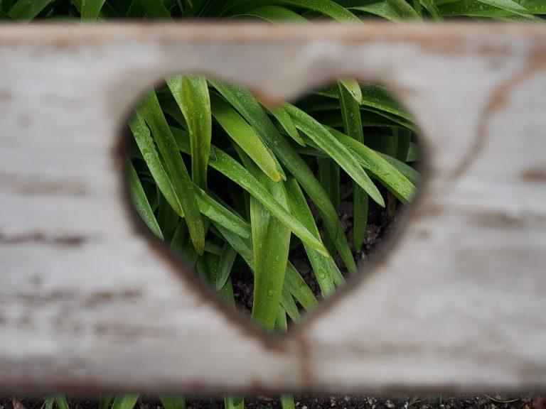 love-1333508_960_720-768x576