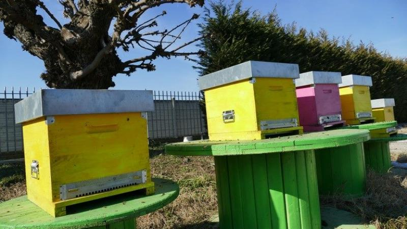 api-sentinelle-ambientali-monitorare-qualita-aria