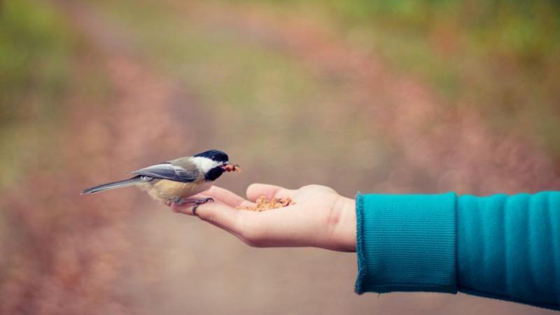 nasce-condominio-uccelli-sogno-ricostruzione-habitat