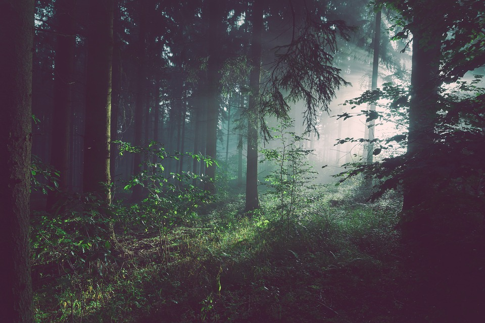 foggy-1081915_960_720