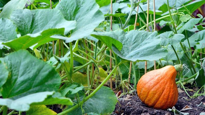 food-forest-come-trasformare-proprio-orto-giardino-oasi-bellezza-cibo