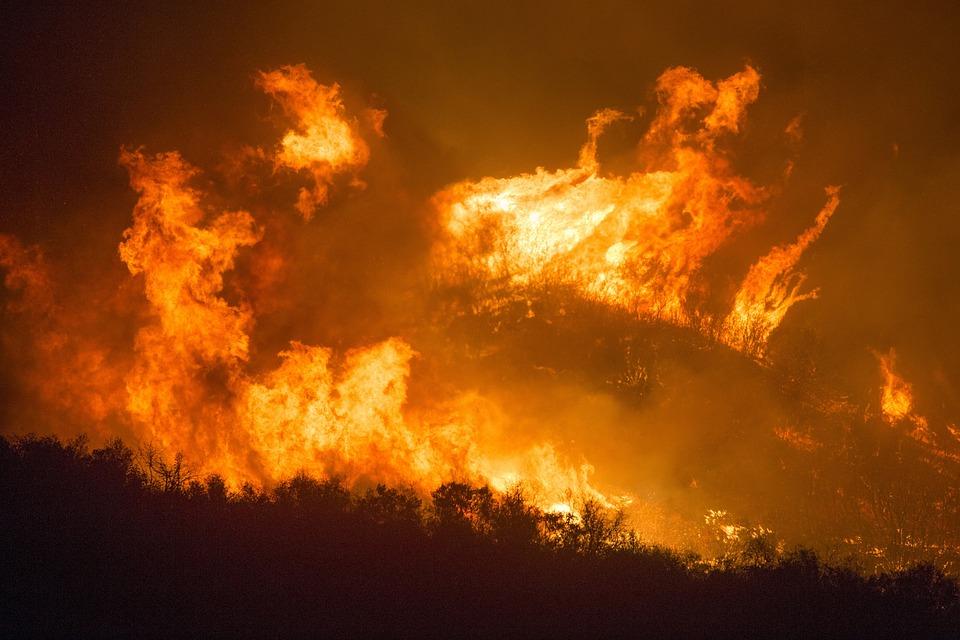 Incendio in una foresta (immagine generica tratta da Pixabay)