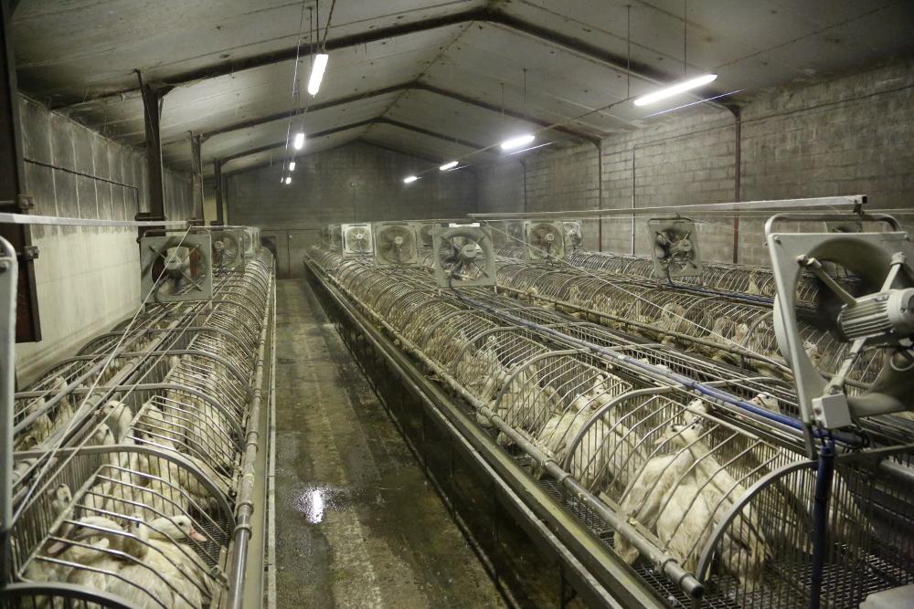 © Compassion in World Farming