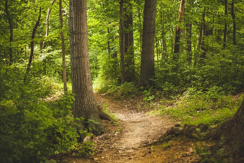 bosco-alberi