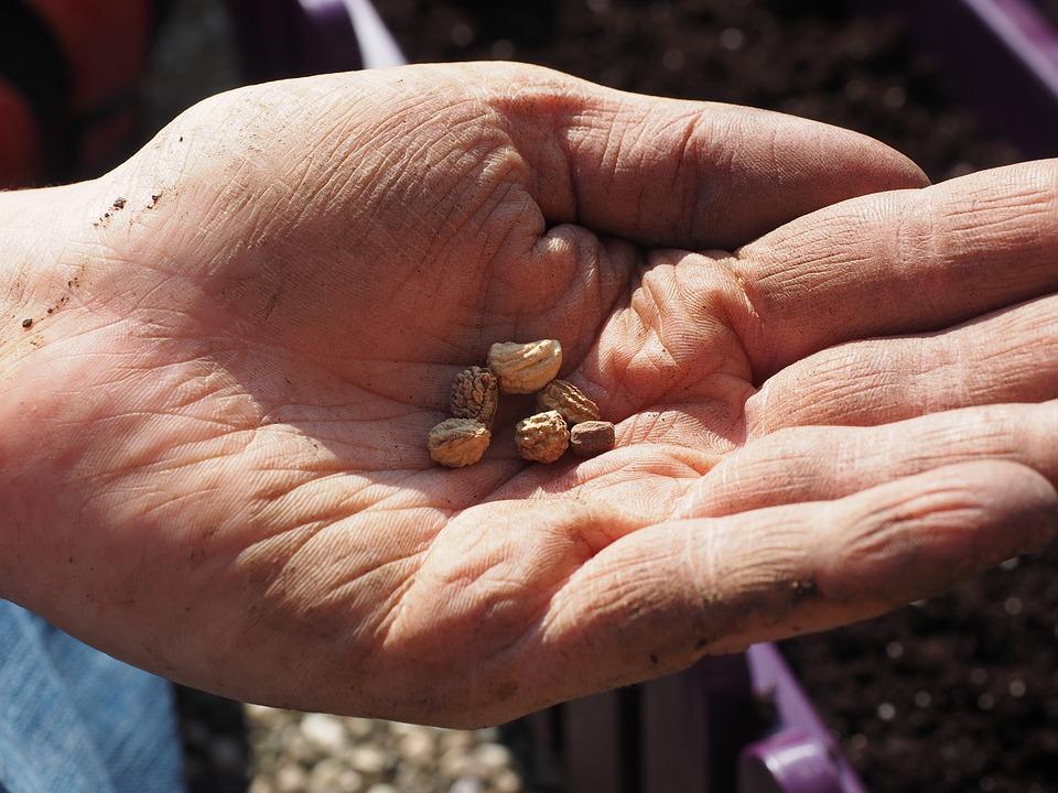 La conservazione dei semi antiche protegge la biodiversità e favorisce la solidarietà