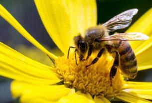 Tra api e fiori arriva il Mercatale della Vallesanta