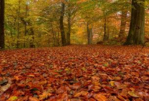 AutunnoSlow nelle foreste casentinesi