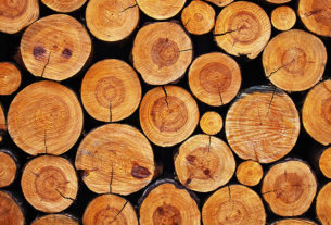 Un bando per giovani laureati dedicato agli usi e tecnologie del legno