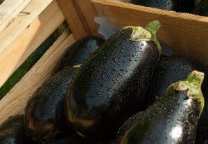La pianificazione del cibo su scala locale: politiche per il futuro del pianeta