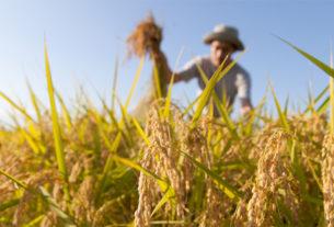 Fare impresa in agricoltura: il Focus tematico a Bibbiena