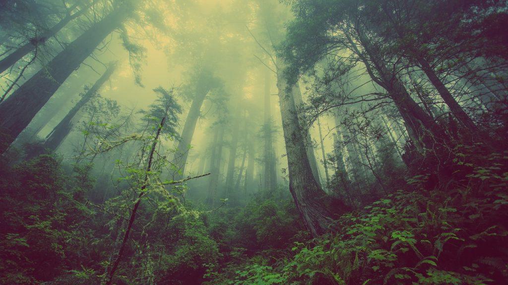 foreste italiane 1
