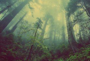 Foreste italiane: un patrimonio inestimabile sotto attacco