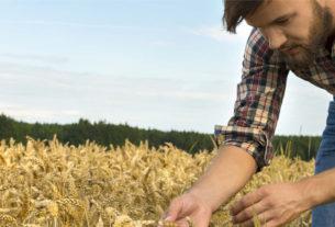 Fare impresa in agricoltura: un nuovo bando per i giovani della Toscana