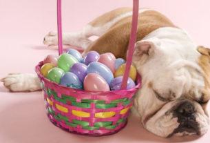 Canile del Casentino, lotteria di Pasqua per aiutare le attività