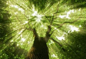 Natura e benessere olistico