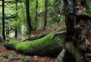 Sasso Fratino candidata come Patrimonio Mondiale Naturale Unesco