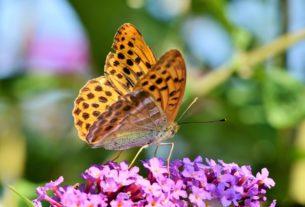 Le aree post industriali di Torino diventano oasi per le farfalle