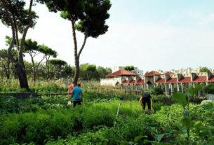 L'Orto della Salute: a Napoli un laboratorio di benessere e socialità