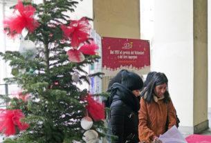 A Torino gli alberi di Natale verranno ripiantati per rinverdire i giardini della città