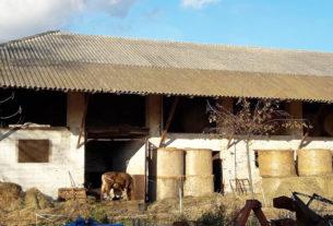 Cascina Angiolina: tra mele e riso si valorizza la biodiversità locale