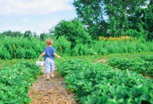 Il 2020 è… l'anno internazionale della salute delle piante!