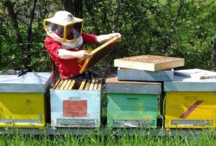 L'Aperitiva: la storia di Christian Maffeo e il mondo delle api